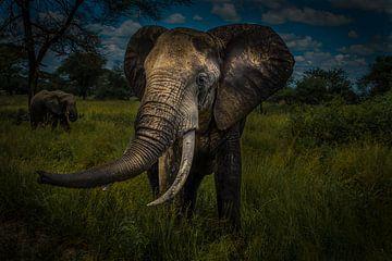 Olifant in Serengeti van Erwin Floor