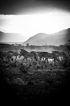 Zebraherde in schwarz-weiß von Dave Oudshoorn