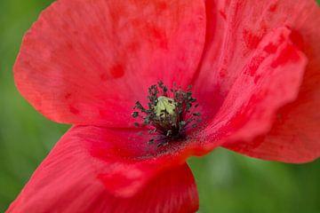 Blütenstaub van Renate Dohr