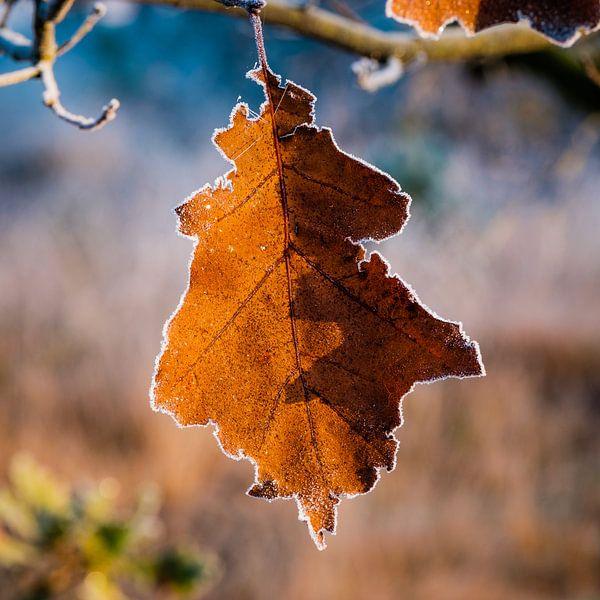De strijd der seizoenen van Tvurk Photography