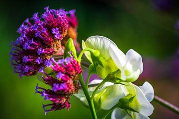 Blüten-Kontrast von Esther's Photos