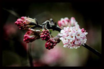 Blüte sur Franz Nagler