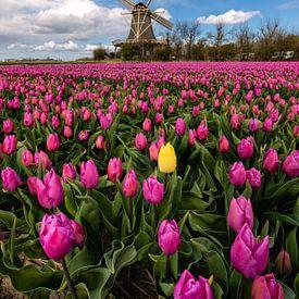 Springtime in the Netherlands von Costas Ganasos