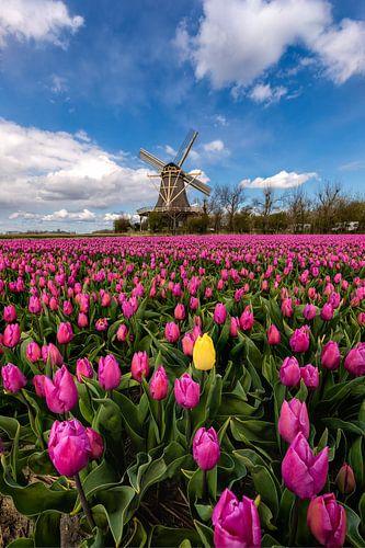 Springtime in the Netherlands von