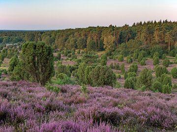 Lüneburger Heide, Totengrund im Morgenlicht von Katrin May