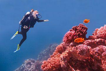 Jonge Nederlandse vrouw duikt in blauwe zee bij koraalrif en  oranje vissen van Ben Schonewille