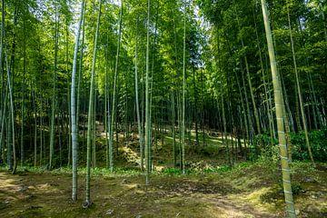 Bambuswald in Japan von Mickéle Godderis