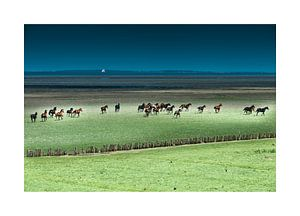 Paarden rennend in het Buitengebied van Geertjan Plooijer