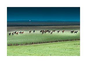 Paarden rennend in het Buitengebied van