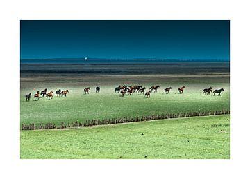 Paarden rennend in het Buitengebied von Geertjan Plooijer