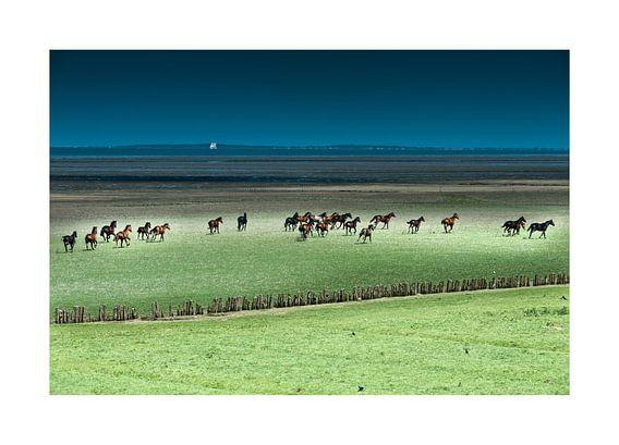 Paarden rennend in het Buitengebied
