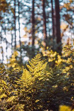 Heerlijke dag in het bos