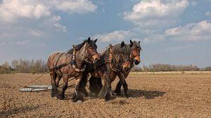 Trekpaarden voorjaarswerkzaamheden van