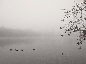 Calmness von Lena Weisbek