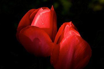 rode tulpen von Jan Gerrit Deelen