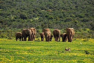 Kudde olifanten tussen de bloemen van