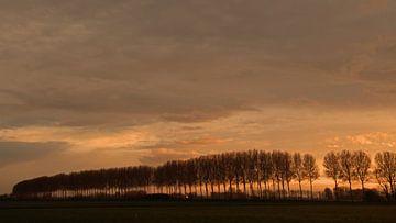 evening light sur Yvonne Blokland