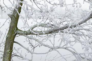 Rijp op een boom. van André Hamerpagt