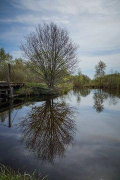 Spiegelboom van Wolbert Erich