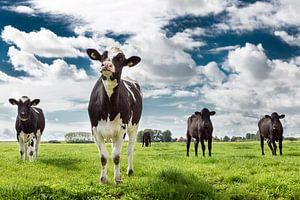 Hollandse Koeien van Martin Cordes