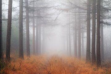 Mist in het Roekelse bos van