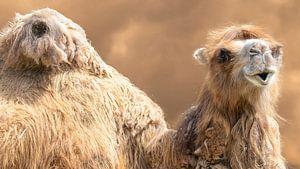 Kamel von Irma Heisterkamp