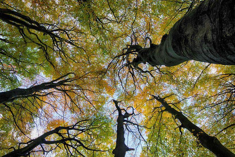 Talking trees van Rob De Jong