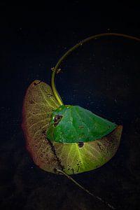 Waterlelie verstoten van het meer van Alround fotograaf Minou Spits