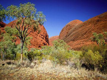 Runde roten Felsen von Kata Tjuta, Australien von Rietje Bulthuis