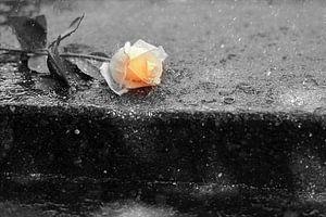 Lost Rose van Véronique Termoshuizen