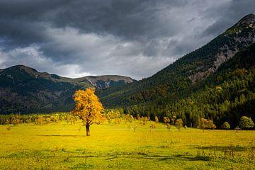 Esdoorn op Grosser Ahornboden in Oostenrijk in de herfst met stormwolkenAdoorn op Grosser Ahornboden van Robert Ruidl