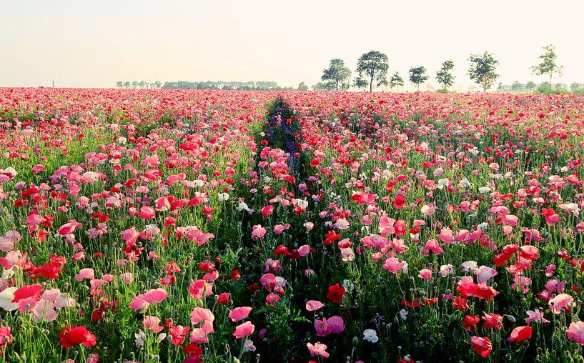 endless pink poppiefield van Els Fonteine