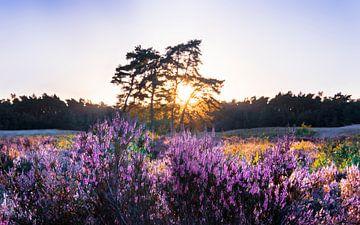 Sonnenuntergang Soester Dünen von Julius Pot