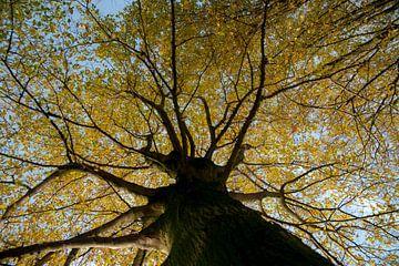 grote boom in herfst kleuren van Hilda van den Burgt