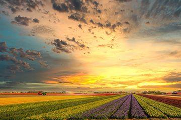 Blumenzwiebelfelder in Nordholland von Watze D. de Haan
