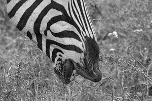 zwart wit Zebra lippen van Marijke Arends-Meiring