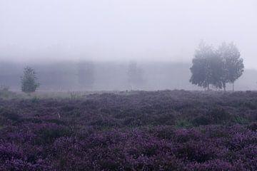 Heidekraut im Nebel von Edith Buster