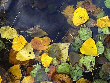 Herfstbladeren - blad op water, geel van Nicole Schyns