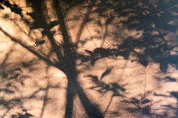 Verträumter Wald #2