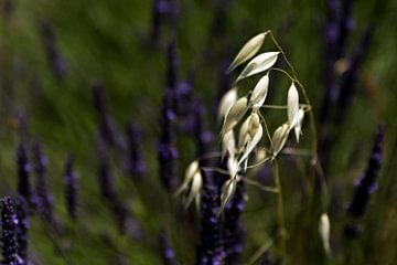 Zo alleen in het paars- So Alone in Purple van Esther Swaager ( Studio Toet)