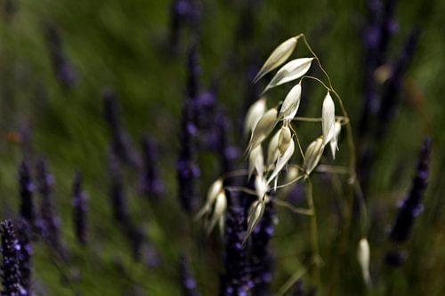 Zo alleen in het paars- So Alone in Purple