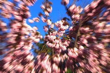 Farben des Frühlings von Thomas Jäger