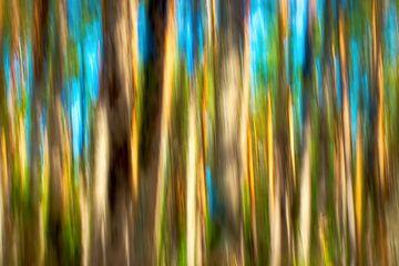 shining trees van Bernd Hoyen