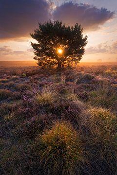Veluwe heide zonsopkomst von Rick Kloekke