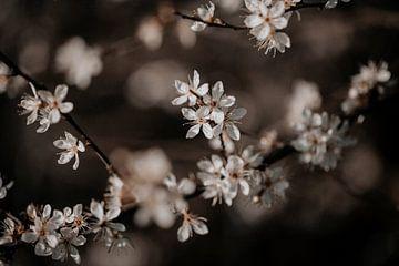 Blüte 10 - Isis Sturtewagen von Isis Sturtewagen
