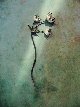 takje van bloem in een straal van zonlicht van Mariska Vereijken