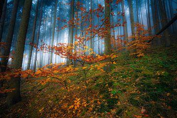 Une colline de pin brumeuse sur Joris Pannemans - Loris Photography