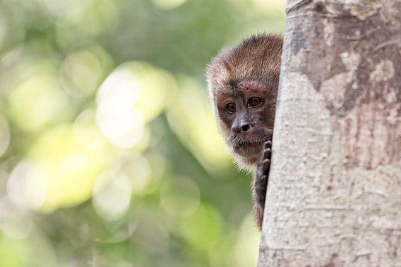 Nieuwsgierig aapje in Peru van Ellen van Drunen