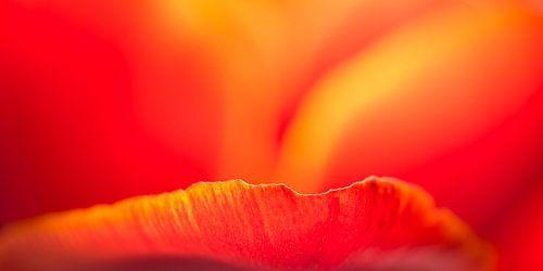 Blütendetails (3)