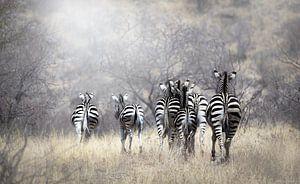 Zebra van Nynke van Holten